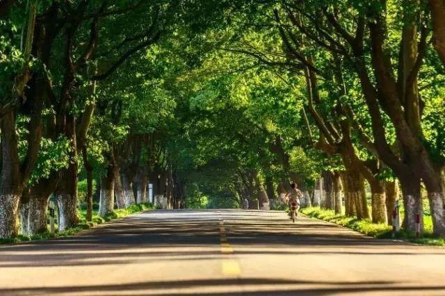 """接力!张灵慕线提名全国""""最美十大农村路"""",一起来为她转、评、赞!"""